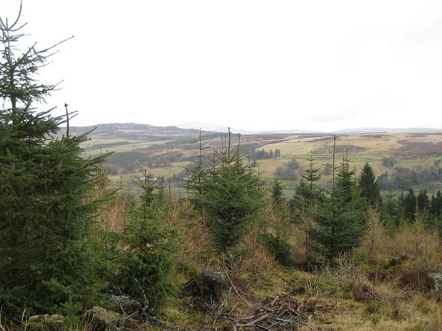 From Blackcraig Forest