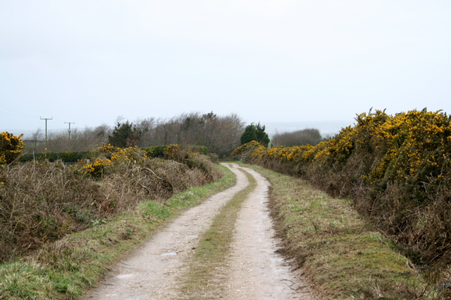 Track to Pawton Gate Farm