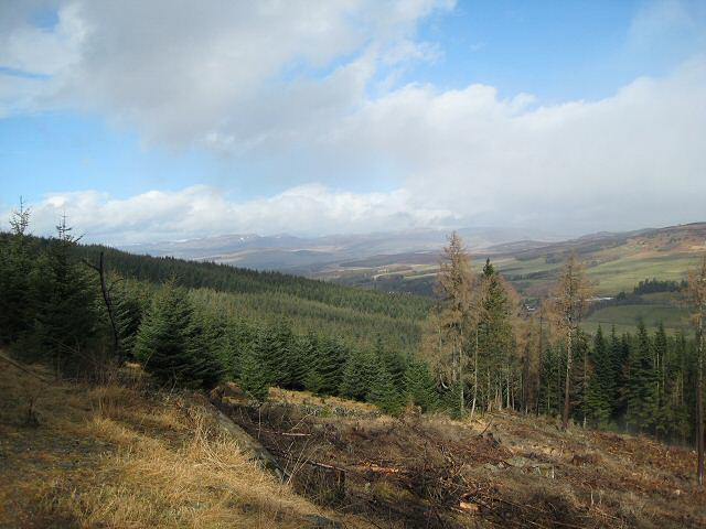 Clearing in Blackcraig Forest