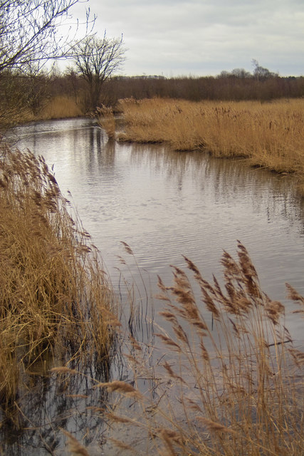 The Reed Beds in March