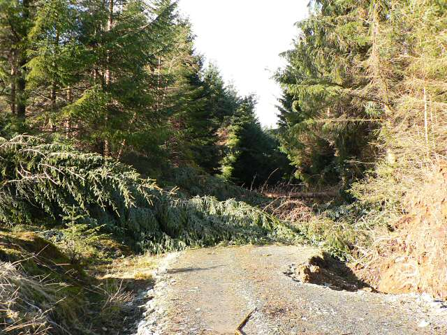 Trees felled by the wind