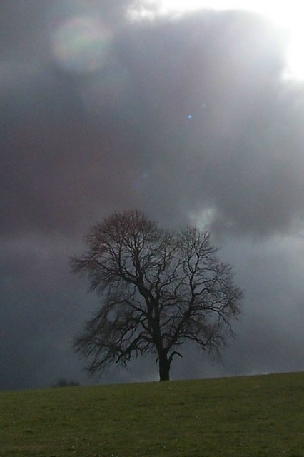 Dark clouds and lonely tree, from Worrall Road