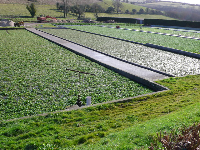 Water Cress Beds