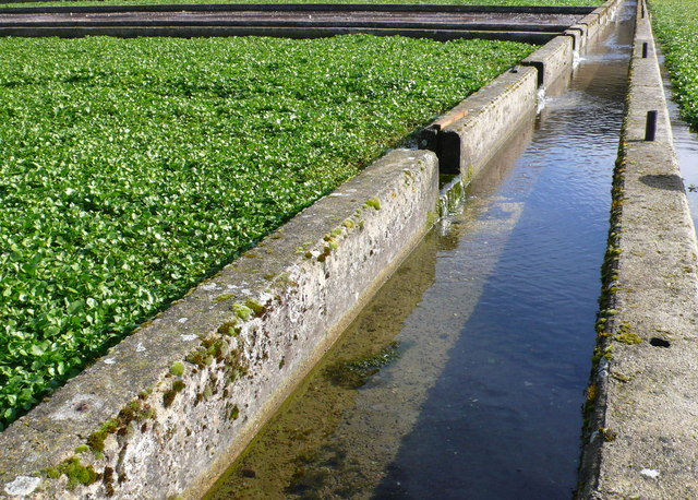 Watercress Bed Irrigation Channel 169 Nigel Mykura Cc By Sa