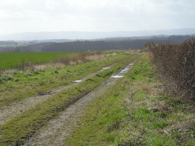 Farm track & field boundary