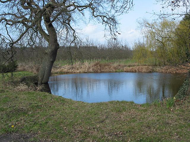 Pond on Hampton Park Road