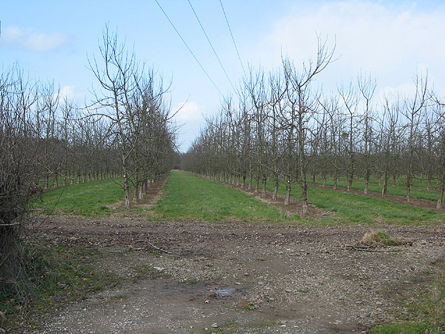 Orchard in winter on Hampton Park Road