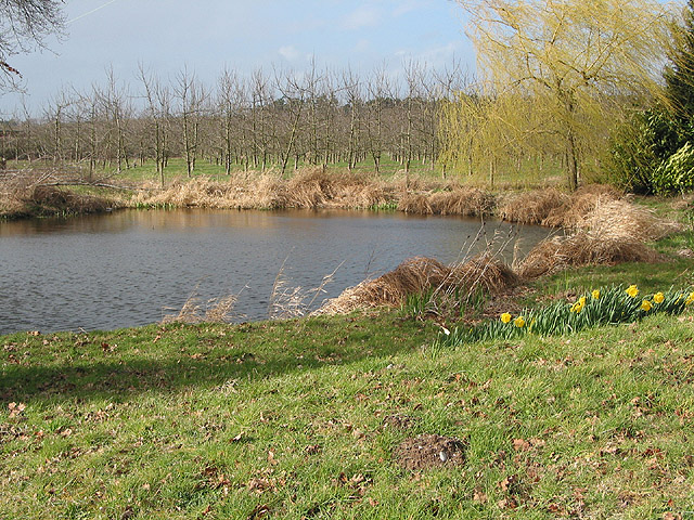 Pond and orchard as winter nears its end