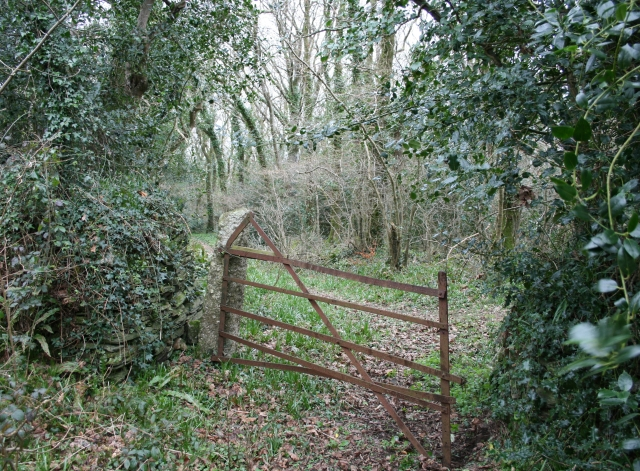Gate in Hawke's Wood