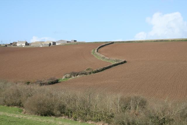 Fieldscape near Trevone