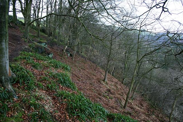 Hebden Wood