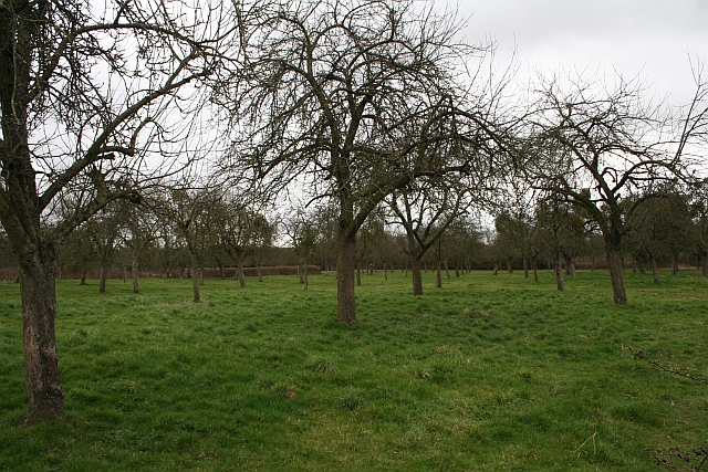 Orchard, Much Marcle