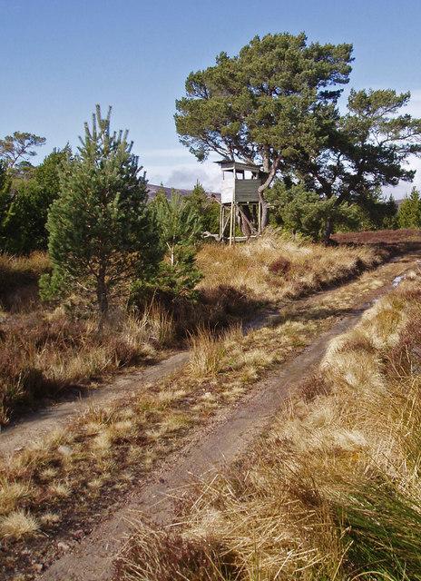Track and Deer Hide