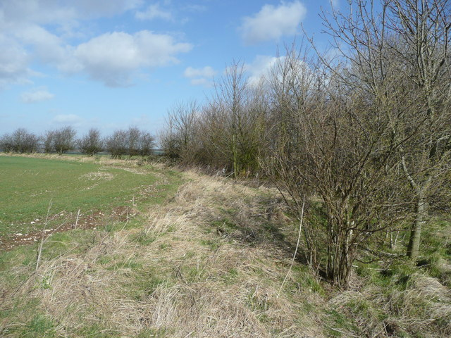 Covert north of Oslear's Lane