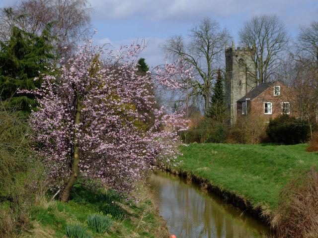 Blossom on Foss Beck side