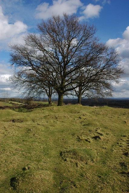 Trees on Coombegreen Common