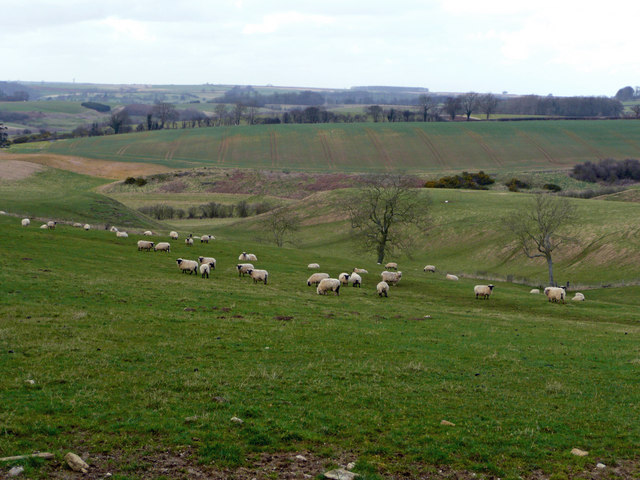 Sheep pasture on the Wolds 1