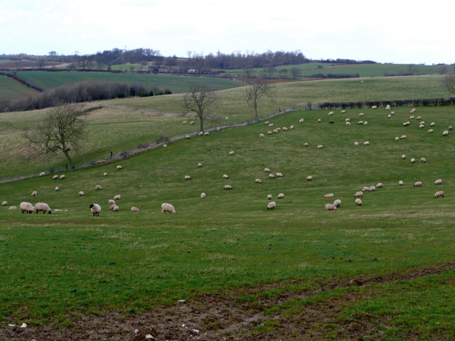 Sheep pasture on the Wolds 2