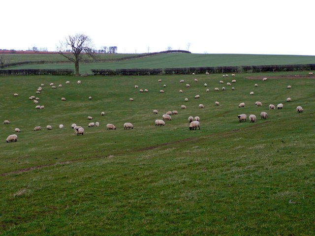 Sheep pasture on the Wolds 3