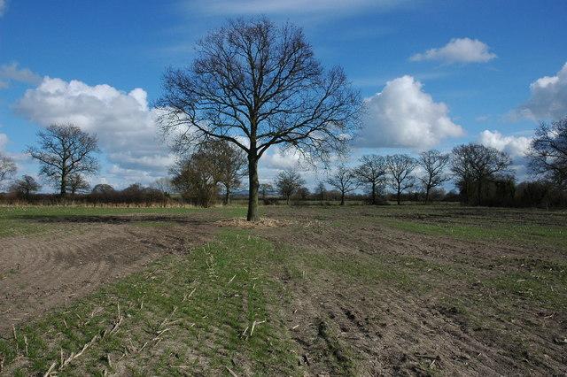 Trees on Longdon Marsh