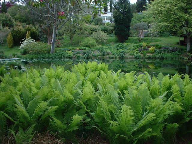 Ferns at Marwood Hill Gardens