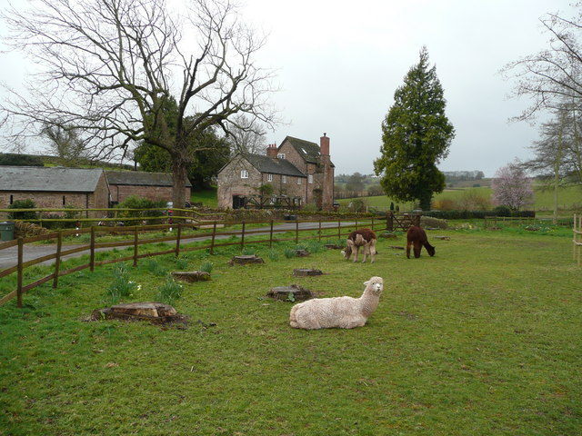 Llamas at The Fording
