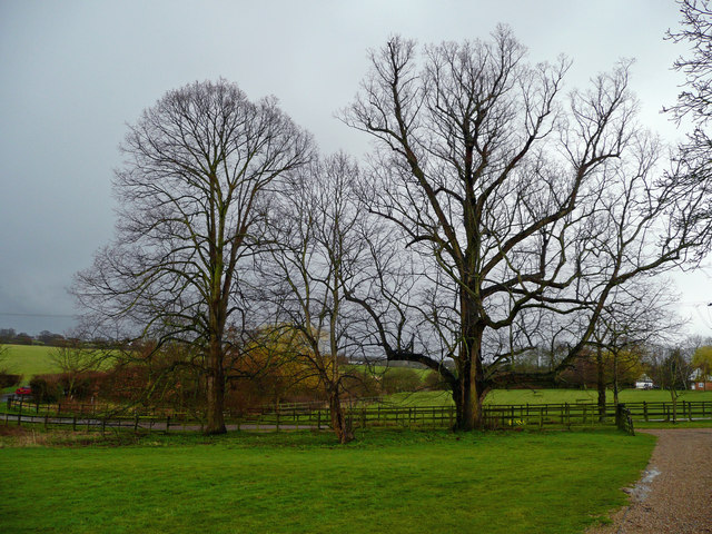 Mature trees at Jenningsbury Farm