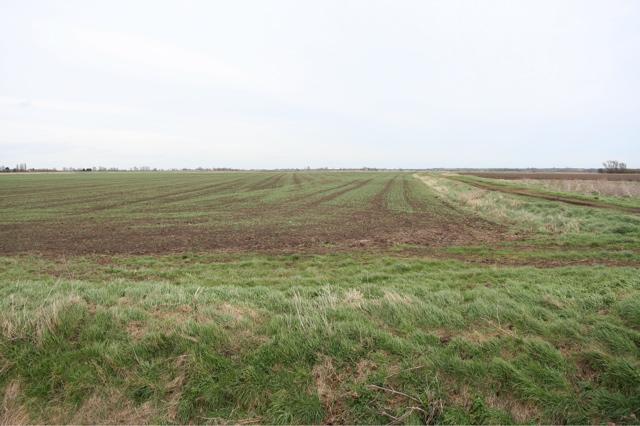 Fields by Drain on Chatteris Fen