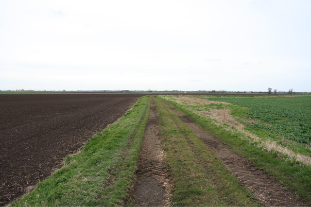 Track leading to Ashwood, Chatteris Fen