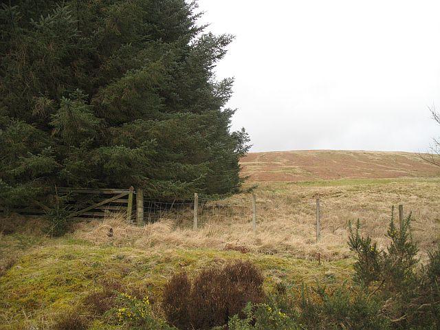 Woodland, Blairnairn