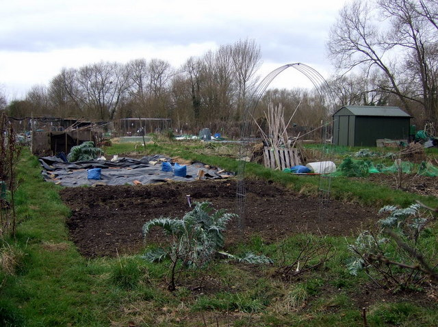 Fairacres allotments with hut