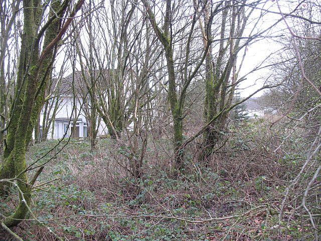 Woodland, Tullichewan