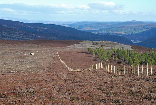 Carn Dearg - a new fence