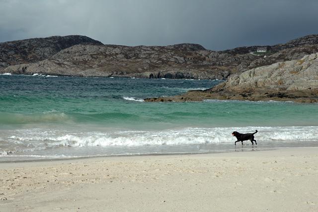 Dog on Achmelvich Beach