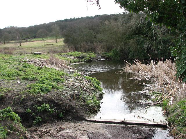 Pond beside Green's Lane