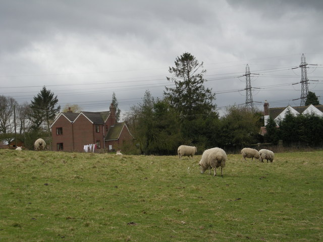 Sheep at Oakridge