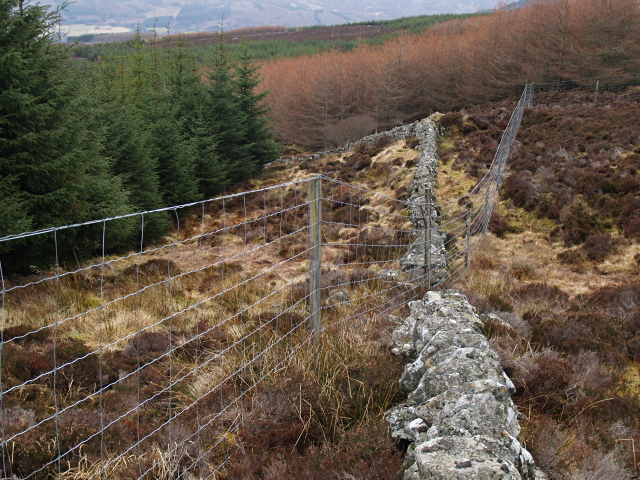 Wall, fences and plantation, Carn Geal