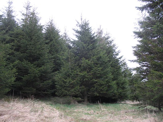 North Cobbinshaw Forest