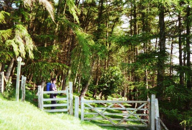 Offa's Dyke Path near Clwyd Nurseries