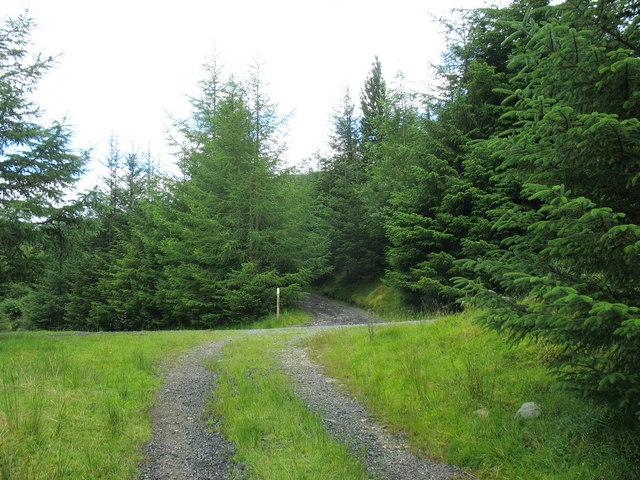 Junction with the upper forest road