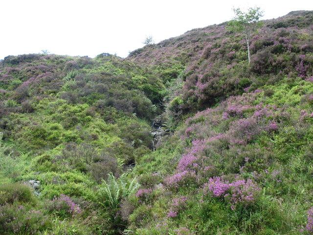 A small hillside valley