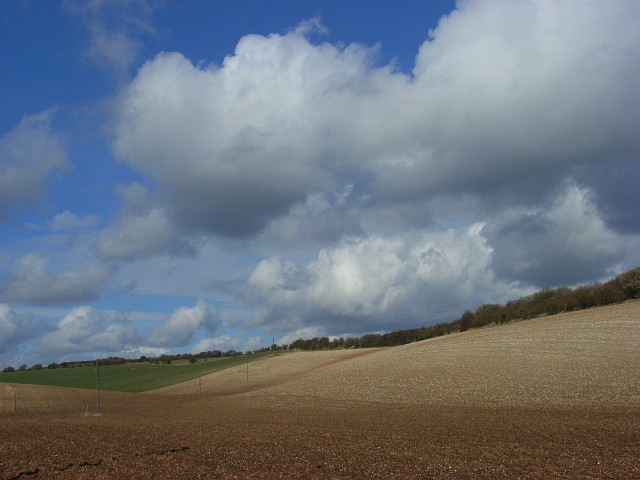 Farmland on the downs near Lambourn