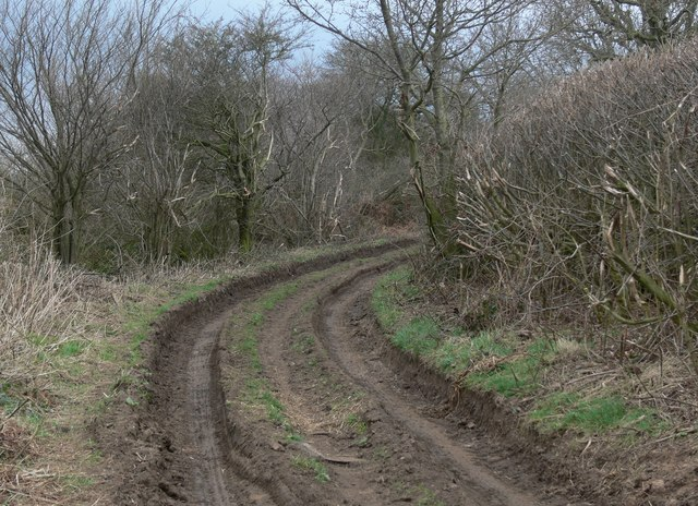 Rutted and muddy track