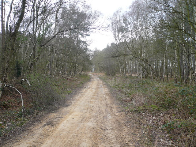 Sherwood Pines Forest Park - Footpath View