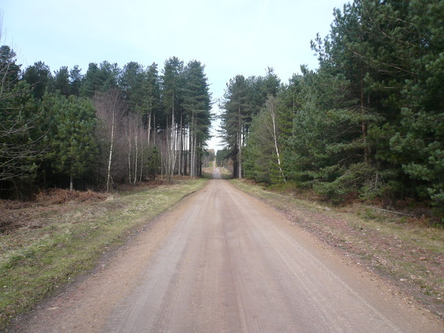 Sherwood Pines Forest Park - Track View