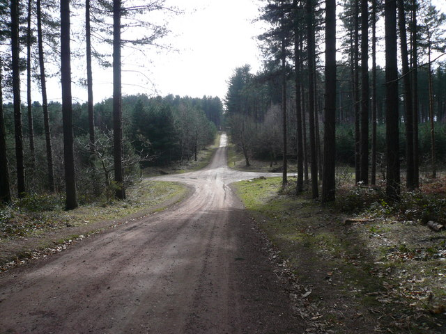 Sherwood Pines Forest Park - Track Junction