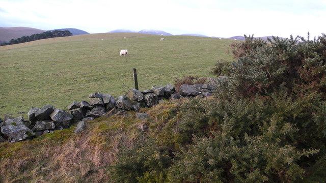 Grazing ground near Broughton