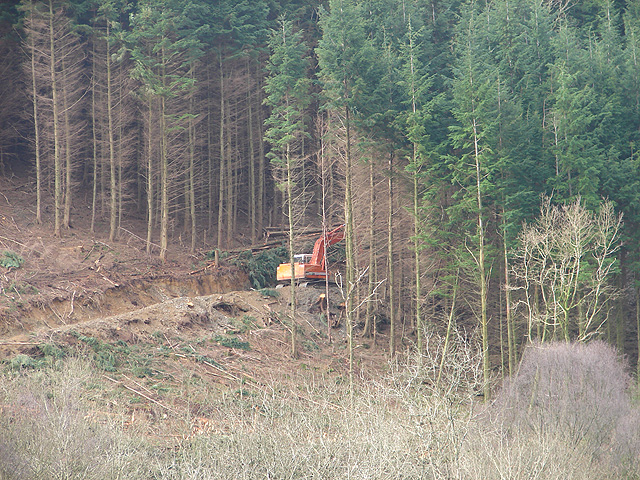 Forestry Clearance