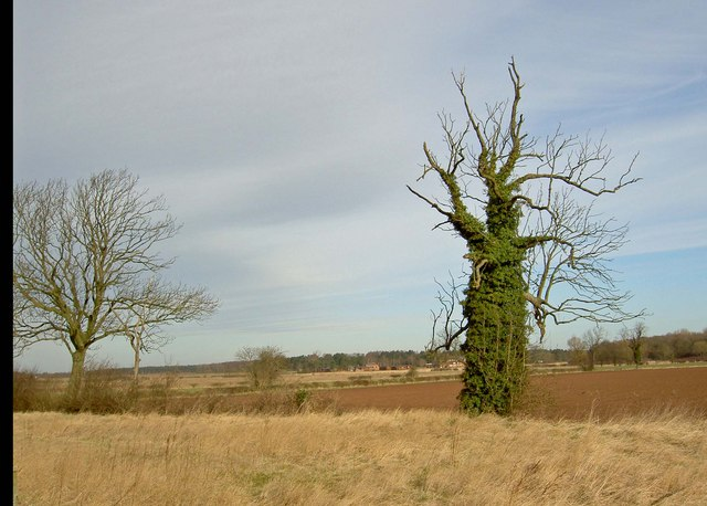 Hidden tree near Bevercotes