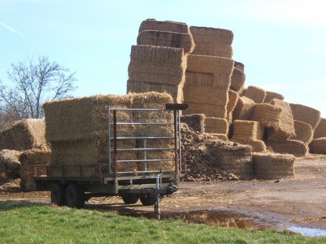 Giant haystacks near Chelsworth